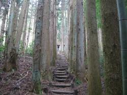 中の森・杉並木